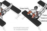 Bench dip triceps exercise illustration