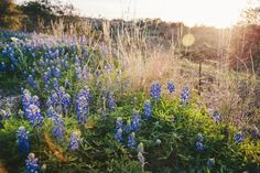 Excited to share this item from my #etsy shop: Texas Bluebonnets, Texas Print, Nature Photography, Texas Wildflowers, Texas Landscape Photo, Fine Art Photo Print Texas Photo, Sunset Print Nature Landscape, Landscape Photos, Landscape Photography, Nature Photography, Fine Art Photo, Photo Art, Photos Black And White, Texas Photography, Blue Bonnets