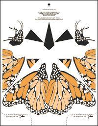 Monarch Butterfly - Free color designs for paper airplanes. Butterfly Dress, Monarch Butterfly, Gift Maker, Bond Paper, Paper Planes, Learn To Fly, Dotted Line, Free Coloring, Carnival