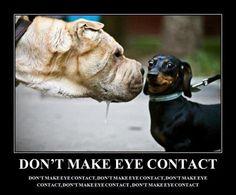 Don't make eye contact!!
