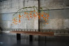 Hanging branch over a table with seasonal Chinese lanterns