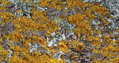sconzani: Auckland walks: Discovering lichen in Cornwall Park