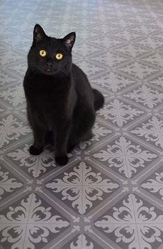 Svart katt, grått gulvbelegg, gang, black cat, grey flooring, hallway Grey Flooring, Mittens, Cats, Animals, Black, Gray Floor, Fingerless Mitts, Gatos, Animales