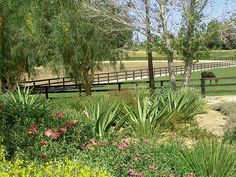 Peaceful setting for horses to heal.  Equestrian Center. Low water use planting. Peacefield Farm, Temecula, CA