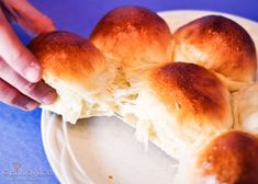 White bread recipe. Can use four ways - white dinner roll, white bread loaf, white hamburger buns, white wrapped hot dog