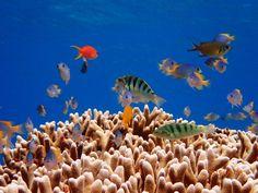 バラス島って、聞いたことがありますか?、それは東洋のガラパゴスとも呼ばれる沖縄の西表島の近くにあって、真っ青な空と海に挟まれて浮かぶ、純白の無人島の名前です。潮流によってサンゴのかけらが堆積して、つくりあげられた自然の奇跡です。地図にさえ存在しないこの島は、海流の変化によってその日その日で形を変えるといいます。サンゴの種類の豊富さは、西表随一とも言われ、その美しさは、とても言葉では言い表せな...