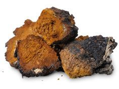 chaga,mushroom-Chaga is known for being one of the best medicinal mushrooms for healthy immune function. Not only that, Chaga is a renowned cancer rem Chaga Tea Benefits, Health Benefits, Diabetes, Mushroom Tea, Fresh Herbs, Superfoods, Herbalism, Stuffed Mushrooms, Flora