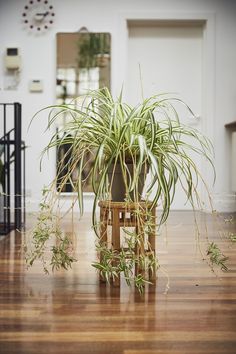 Fresh Natural Kitchen With Tropical Plants 30 Best Indoor Plants Good Inside Plants For Small Space Gardening regarding Fresh Natural Kitchen With Tropical Plants Colorful Plants, Unique Plants, Cool Plants, Tropical Plants, Air Plants, Potted Plants, Kew Gardens, Outdoor Gardens, Best Bathroom Plants