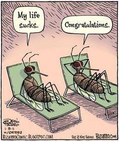 My Life Sucks.thats funny Cartoon Jokes, Funny Cartoons, Funny Jokes, Hilarious, Bizarro Comic, Morning Humor, Sunday Morning, Sarcasm Humor, Twisted Humor