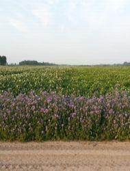 Help jij mee om de land- en tuinbouw bijenvriendelijk te maken? Door een akkerrand bij jou in de buurt om te toveren tot een bloeiende bloemenstrook, kan de bij zich volop bezig houden met het bestuiven van de aangrenzende gewassen. Doe jij ook mee?