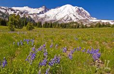 #Spring is starting to bloom! If you're a flora fan, here are #America's 10 Best Spots for Seeing #Wildflowers, via @Fodor's Travel