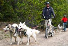 Breckenridge Colorado Summer Activities Scooter Tour. SnowCap offers summer dogsledding!!!