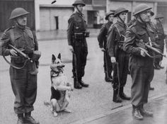 British troops on parade they're accompanied by a well trained German Shepherd standing to attention. What is also interesting about the photograph is the sergeants in the foreground are both armed with MkI STEN Guns.