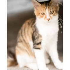 Location:染井墓地 東京都 Tokyo Camera:D750 Lens:AF-S VR Micro-Nikkor 105mm f/2.8G IF-ED Name:alley cat  #猫 #ネコ #動物 #ねこ部 #猫部  #にゃんこ #ペット #写真好きな人と繋がりたい  #一眼レフ #ファインダー越しの私の世界 #愛猫 #ダレカニミセタイケシキ #猫好き #team_jp_ #catstagram #kittens #petofinstagarm #petoftheday #animal_sultans #animal_captures #animalsmood #splendid_animals #instaanimal #animalphotos #catofinstagarm #bestmeow #cat_of_world #nature_sultans #naturebrilliance #macro_vision