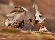 Image result for wildlife photographer of the year 2015