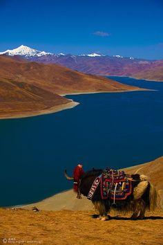 Yak on an adventure in Tibet /// #travel #wanderlust
