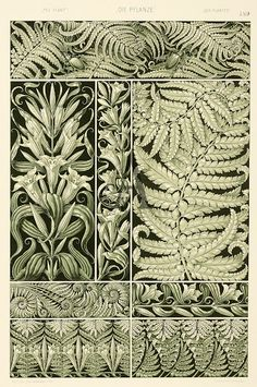 Fern plate from Die Pflanze in Kunst und Gewerbe (The Plant in Art and Trade), Art Nouveau illustration by Anton Seder. Published by Gerlach & Schenk, Vienna, 1890 Motifs Art Nouveau, Design Art Nouveau, Art Nouveau Pattern, Art Deco, Art Nouveau Flowers, Illustration Art Nouveau, Plant Illustration, Botanical Illustration, Botanical Drawings