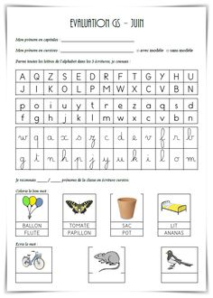 Cursive, Evaluation, Document, Word Search, Words, Blog, Blogging, Horse