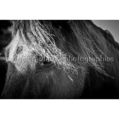 Horse Photo Fine Art Photography Animal Photography Horse Lover Equine... ($9.41) ❤ liked on Polyvore featuring home, home decor, wall art, horse home decor, photography wall art, black and white home decor, photographic wall art and black white wall art