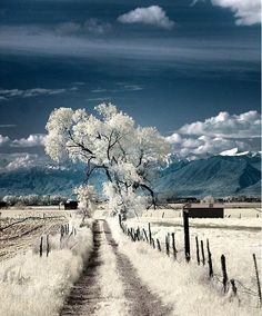Winter snow represents the Crown Chakra - be open to the wisdom of the Universe.  www.jazzyeco.com