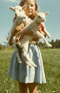 REMINDS ME OF MY TWO PET LAMBS DIMPY AND SPOTTY