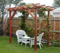 Grape Trellis for shade and food.