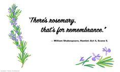 Rosemary_Quote