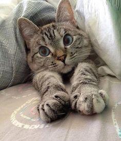 """Доброе утро⛅️ Четверг давно нужно переименовать в """"завтра пятница""""! Так звучит празднично и на душе приятно☺️ Желаем всем прекрасно дня! #hello__ru #доброеутро #кот"""