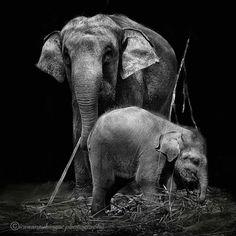 Elefántok...