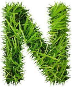 "Photo from album ""Parks & Recreation}-"" on Yandex. Save Earth Posters, Parks And Recreation, Yandex Disk, Views Album, Herbs, Amp, Beautiful, Herb, Medicinal Plants"