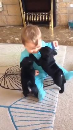 Fluffy animals, animals and pets, more cute, cute faces, Cute Animal Videos, Funny Animal Pictures, Dog Pictures, Children Pictures, Cute Videos, Baby Videos, Cute Funny Animals, Cute Baby Animals, Animals And Pets