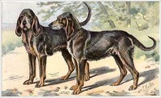 Chien-gris | 14 Extinct Dog Breeds You Will Never Get To Pet