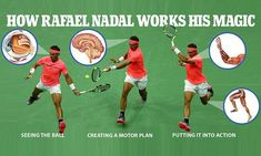 Neuroscientists from Columbia University who study perception and coordination explain to Daily Mail Online how tennis star Rafael Nadal , who is playing tonight, crafts such expert shots. Tennis Lessons, Tennis Tips, Soccer Tips, Tennis Camp, Tennis Clubs, Tennis Players, How To Play Tennis, Play Soccer, Steffi Graf