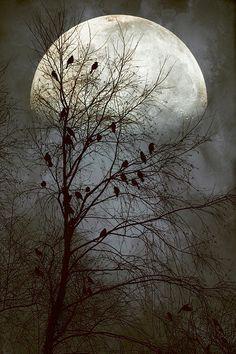 """Black Birds Singing in the Dead of Night,"" by John Rivera, Fine Art America."