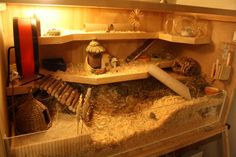 big, natural hamster cage for dwarf hamster. 90x45x50