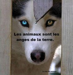 (33) Défendre les animaux et protéger la nature