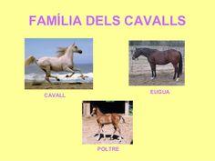 Resultat d'imatges de el cavall