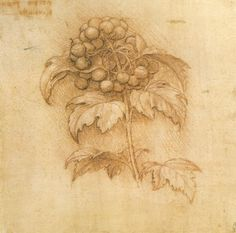 Leonardo Da Vinci Drawings | Leonardo da Vinci HD Drawings Wallpapers | Free HD Wallpapers, Hd ...
