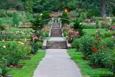 The International Rose Test Garden, Washinigton Park, Portland, Oregon