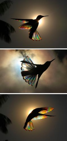 A rainbow of light bends through hummingbird wings in .- Ein Regenbogen des Lichts beugt sich durch Kolibri-Flügel in Fotografien von Ch… A rainbow of light bends through hummingbird wings in photographs by Christian Spencer – funny pictures - Beautiful Birds, Beautiful World, Animals Beautiful, Animal Photography, Amazing Photography, Photography Jobs, Newborn Photography, Photography Lighting, Photography Awards