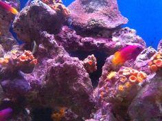 Coral World St. Thomas USVI