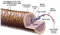 Inverto-Hair-Structure