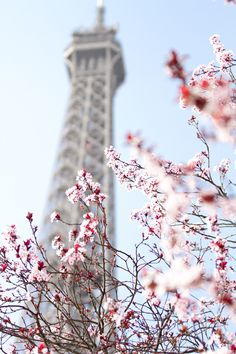In my ballerines - Cherry blossoms in Paris