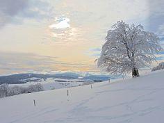 Wetterbuche in Winterlandschaft