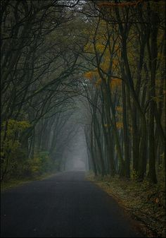 dark forest by mamnaimie, via Flickr