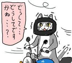 現場 猫 なん j