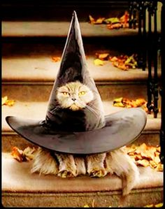 Cat lovers have come up with some really inventive and silly costumes for their four legged friends. From a cat that looks like a lobster in a pot, to a scuba diving feline, these pets are put into t… Cute Cats, Funny Cats, Funny Animals, Cute Animals, Chat Halloween, Halloween Humor, Halloween Costumes For Cats, Halloween 2019, Fall Halloween
