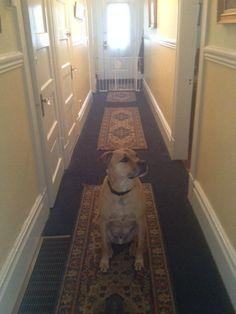 Hallway with Rigby