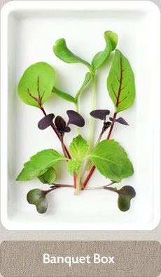 Herbs Micro Herbs, Grow Your Own, Banquet, Cupboard, Cook, Tea, Plants, Clothes Stand, Armoire