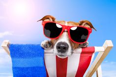Independence Day Pooch!